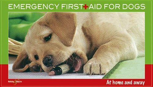 Emergency First Aid for Dogs : At Home & Away